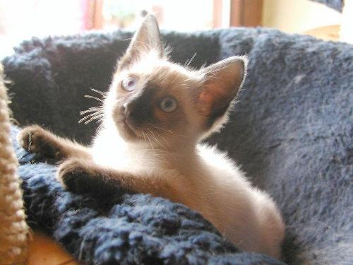 Baghis Baby 6 Wochen alt.