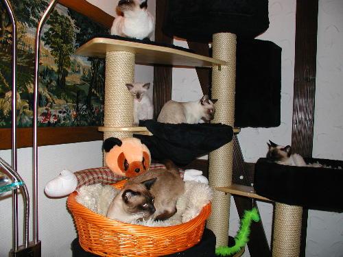 Kratzbaum-Familienleben